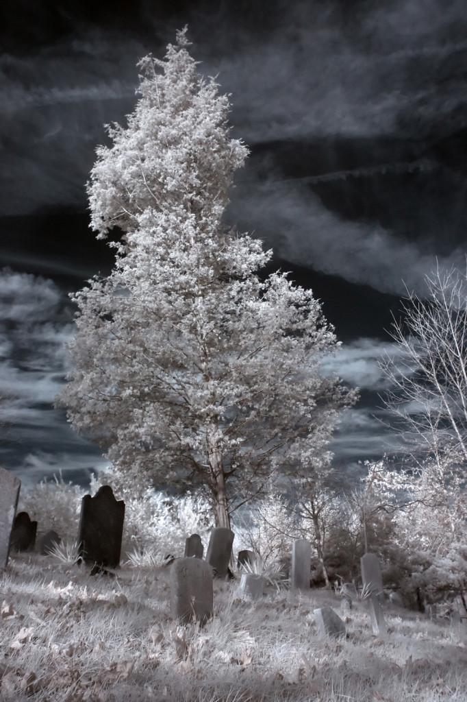 carll cemetery IR 004_1