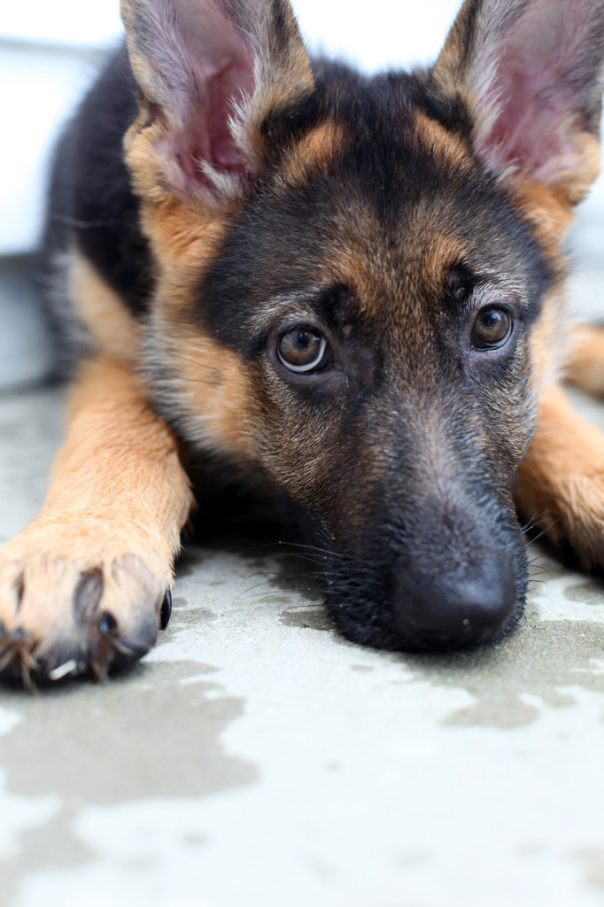 puppies 045