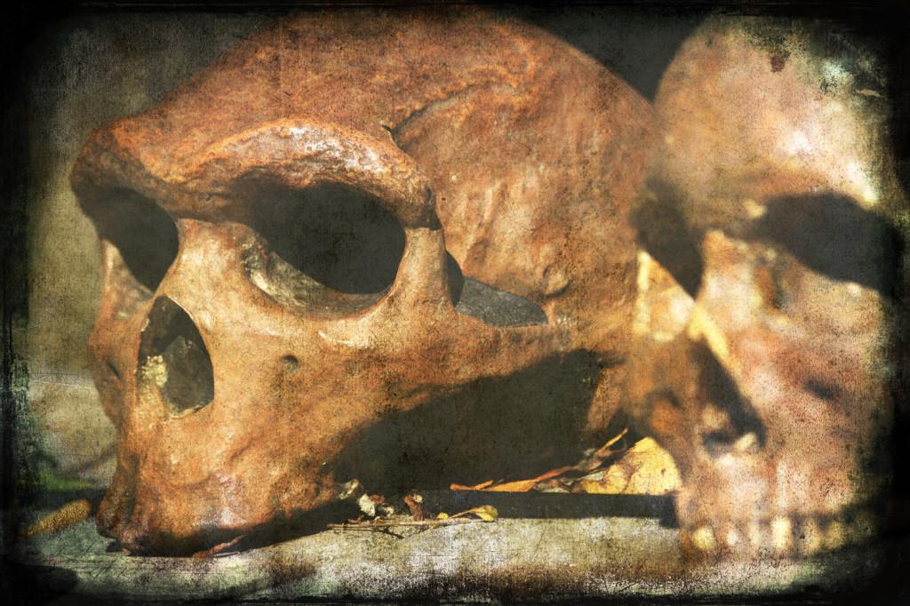 skulls white 2