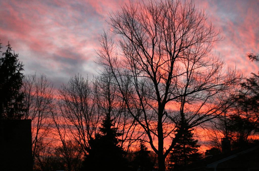 tree sky white